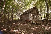 Заброшенная деревня Науховичи в Чечерском районе Гомельской области