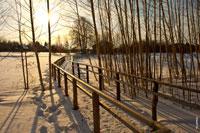 Дорога с деревянными перилами к Родовому святилищу удмуртов идет через березовую рощу