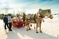 Лошадь, запряженная в сани, в «Лудорвае»