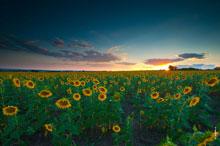 Природа Новочеркасска, HD фото пейзажи