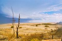 Фотографии Куршской косы: фото высота Мюллера, танцующий лес, дюны Эфа