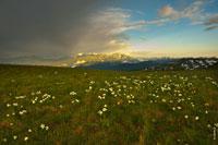 Горные Кавказские хребты вдали светятся в желтых лучах заходящего солнца