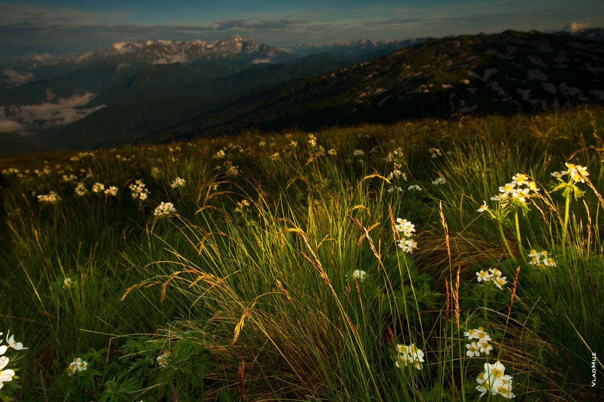 Альпийские луговые травы после дождя сверкают в лучах солнца (полноразмерное фото в HD качестве с разрешением 2830 на 4260 пикселей можно открыть в новом окне)