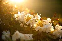 Рододендроны на горных склонах в контровом солнечном свете