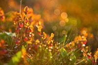Роса искрится, украшая цветы и травы