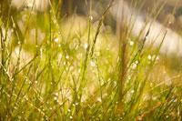 Фото росы на луговых травах