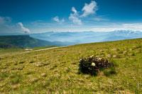 Луговые цветы, травянистые склоны на переднем плане, вдали - ряды горных хребтов Кавказа