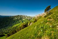 Фото горного склона с деревьями, вдали гора Гузерипль